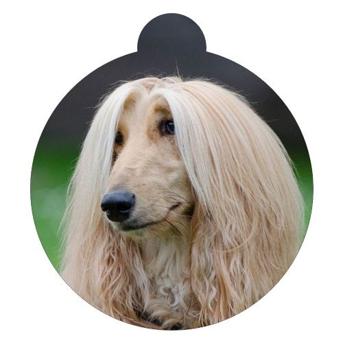 Afghan Hound Picture ID tag